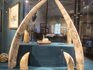 Courtesy of The Whaling Museum at Cold Spring Harbor